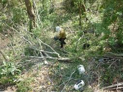 裏山で雑木の伐採