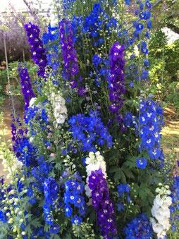 園内はお花でいっぱい