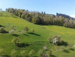 Blick aus dem Fenster in Richtung Tal