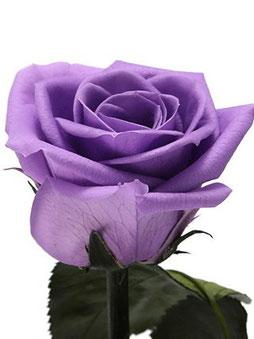 プロポーズや結婚記念日、誕生日祝いに贈りたいプリザーブドフラワーのステム付きローズ花束