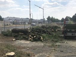 Die abgesägten Bäume machen Platz für das neue Familienviertel