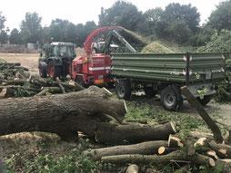 Baumfällarbeiten in Bremen-Arsten