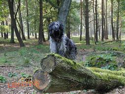 Hündin auf einem Baumstamm