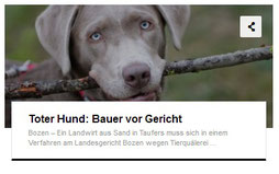 Südtirol: Toter Hund - Bozen - Sand in Taufers