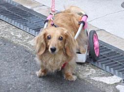 腰椎疾患による歩行器使用例