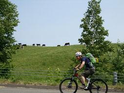 牛も沿道で応援!?