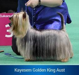 Кayesem Golden King Aust  -  Импорт Австралия.