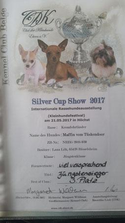 ProKromfohrländer Ausstellung