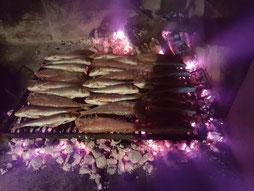 MAG Lifestyle Magazin Fische & Muscheln der kroatischen Adria, Beschreibung der Fische und Muscheln in deutsch und Namen in kroatischer Sprache: Petersfisch Drachenkopf Zahnbrasse Goldbrasse Wolfsbarsch Tintenfisch Miesmuscheln Jakobsmuscheln