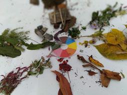 天理市長滝町の秋の色~ネイチャーゲーム