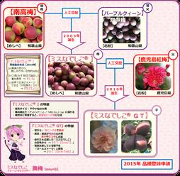 ミスなでしこⓇGT 家系図