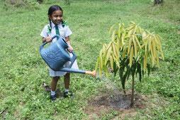 1年前に植えたマンゴーの木のお世話を続 けています。早く大きくなりますように!