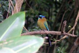 Natur, Vogel, Costa Rica