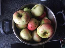 """Äpfel """"Jakob Fischer"""" im Schnellkochtopf"""