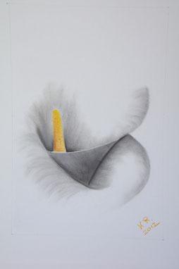 Calla (2) 40x50 cm