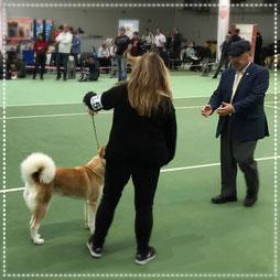 Japan Akita, Umeko of Kishi Ken, Hund, Zucht, Hundezucht, Akita Club e.V., 40 Jahrfeier Akita Club, Hundeausstellung