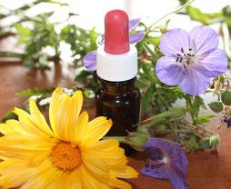 Spagyrik, Heilpflanzen, Essenzen, Homöopathie