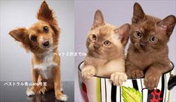 川崎区 ペット可物件 犬 猫 2LDK 賃貸マンション コンフォート