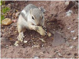 Streifenhörnchen beim Nachmittagssnack