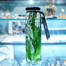 lab bottle plants 販売