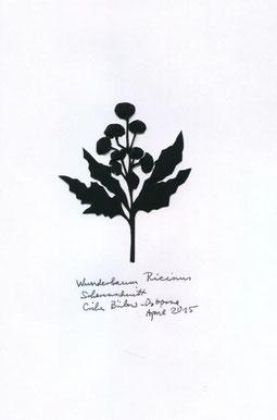Rizinus oder Wunderbaum
