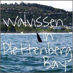 Op zoek naar walvissen in Plettenberg Bay. Hoge golven, walvissen, dolfijnen en een zeer bijzondere landing op het strand.