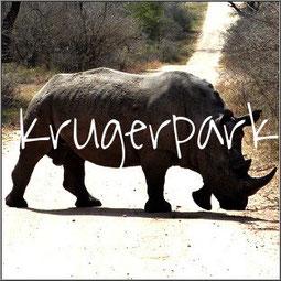 Het Krugerpark, een fantastisch gevoel om opeens een neushoorn over te zien steken of een kudde olifanten te ontdekken. In een woord schitterend!