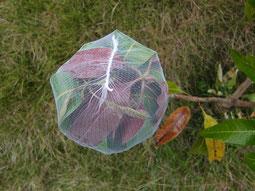 強風対策で袋をかけた状態。