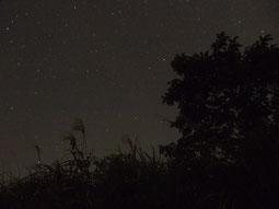 夜間撮影 XZ-1