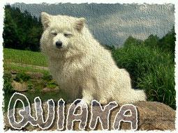unsere Quiana