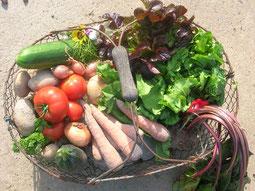 panier fruits et légumes