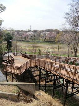 ●国分寺崖線の上から公園を見下ろせる階段
