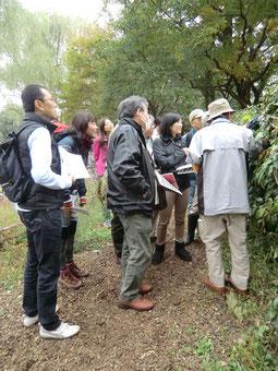 ●自然観察園のボランティアガイド(11月8日自転車散歩ツアー)