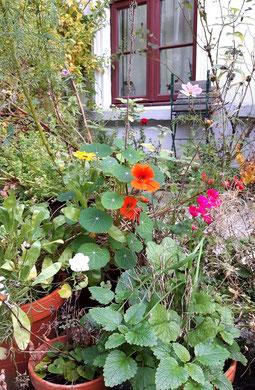 Kapuzinerkresse, Geranie, Cosmea, Calendula, Garten, Töpfe, Blumenkugeln, Seedbomb