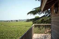 Blick aus dem Baumhaus des Relais Franc Mayne in die umliegenden Weinberge