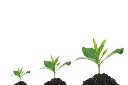 Personalentwicklung, Weiterbildung, Schulung, Beratung, Lösung und Konzepte von Esther Fusz - Individuelle Entwicklung