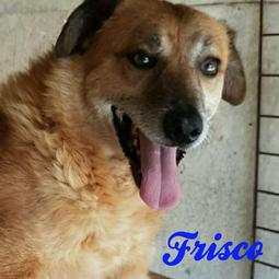 FRISCO - PATE GESUCHT