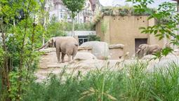 Zoo Basel Elefantenanlage Tembea 1