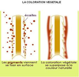 couleur végétale 100% naturelle