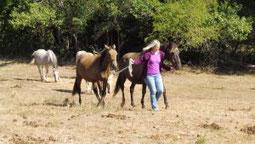 Mein Pferd verstehen, was will mein Pferd, was denkt mein Pferd. Tierkommunikation lernen
