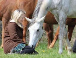 Tiere verstehen, Pferd verstehen lernen, Pferdekommunikation