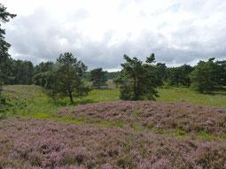 An die strukturreichen Heideflächen grenzen Wälder und die Bachniederung. Heike Vullmer erläutert die Besonderheiten der Standorte. (Foto: Udo Fischer, TouROW)