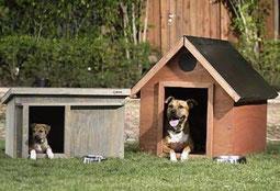 Comportamiento canino en casa pinchando.
