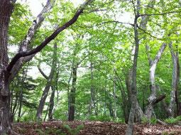 自然の景色 健康 さいとう整体