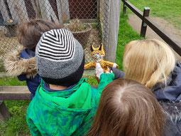 Luxi stellt seine Freunde, die Tiere des Waldes vor