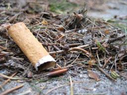 Zigarettenkippe im Wald