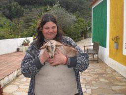 Porca Preta Pontalinho,Serra de Monchique,Ziegen Kinder,Algarve,Portugal