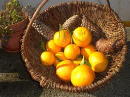 Porca Preta Pontalinho,Korb mit Mandarinen und Pinien Zapfen,Serra de Monchique,Algarve,Portugal