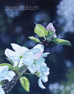 Apfelblüte, thea herzig, fotorealismus, orginale