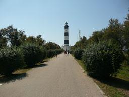 Chemin d'accès au phare de Chassiron